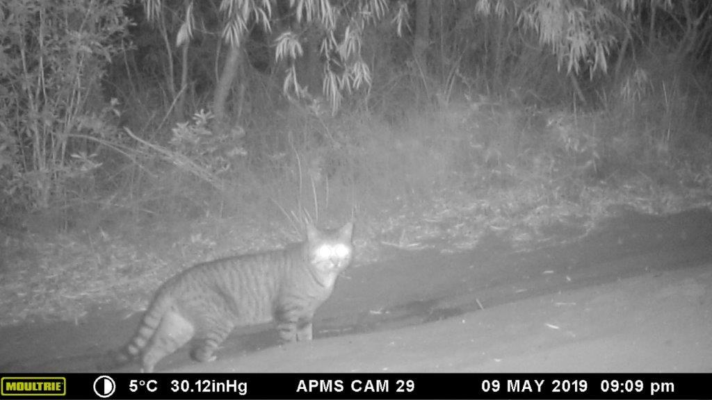captured on camera in West Cape Howe National Park